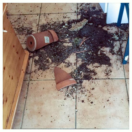 Pots cassés après le passage des chatons